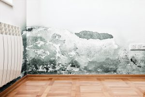 Restore the clean and healthy environment in your home or business with mold removal by K-tech Kleening.